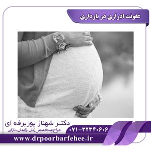 عفونت ادراری در بارداری